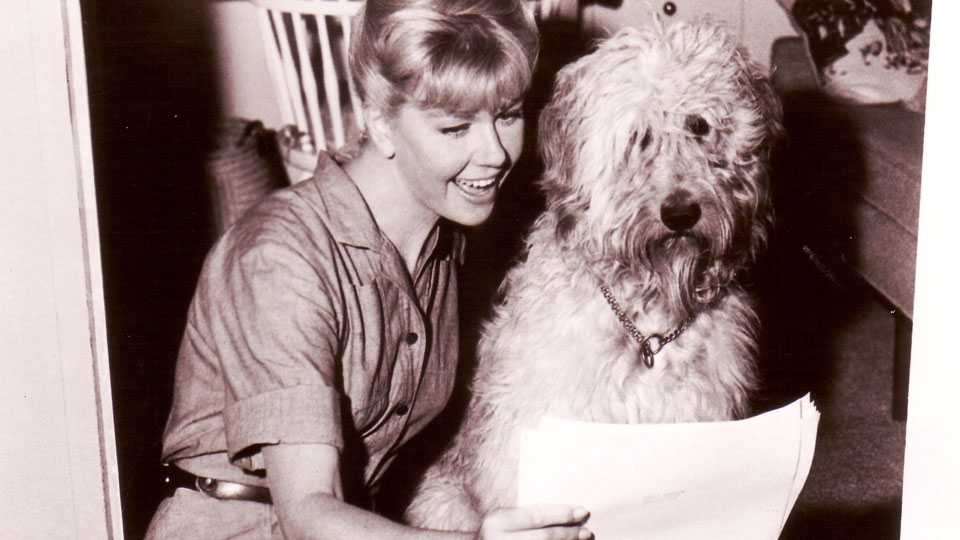 Originalaufnahme vom PLEASE DON'T EAT THE DAISIES mit Doris Day und ihrem Co-Star Hund Hobo